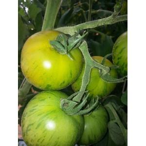 Tomates  Green  Zebra               / Kg