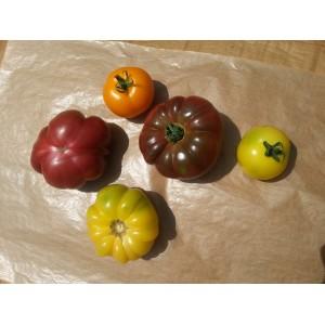 Tomates Anciennes Coloris Méla