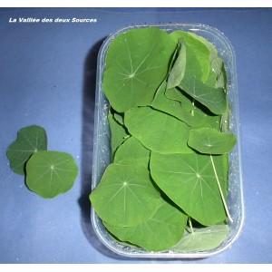 Petites feuilles de Capucines     en Bq