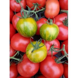 Mini Tomate     Jaune