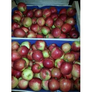 Pomme de   Ferme Déco     (AB)