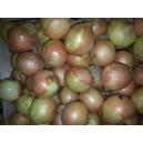 Oignons boule  ( A.B. )