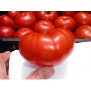 Tomates  CF
