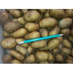 Pomme de terre    Grenaille    (AB)             /Kg