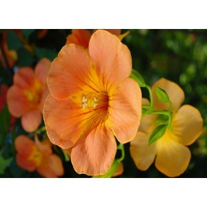 Fleurs  Diverses