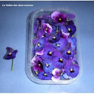 Fleurs de Violette des Prés
