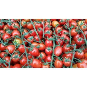 Tomate  Cerise  / kg