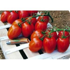 Tomates    Olivette            /Kg