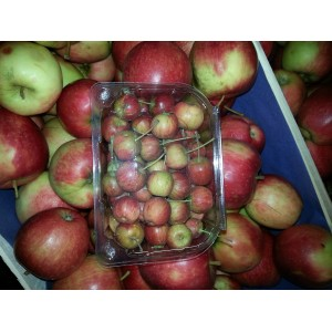 Mini  Pomme Cerise   (AB)                   /Bq