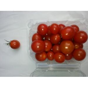 Tomate  Cerise  /  Bq